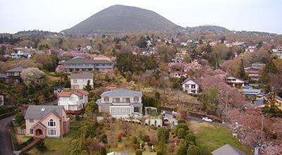大室山と桜が満開の伊豆高原桜並木