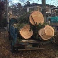 樹齢89年の大木を伐採のサムネイル